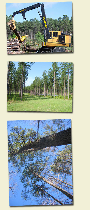 Sell Timber   Sell Land   Sell Trees - Piedmont Land